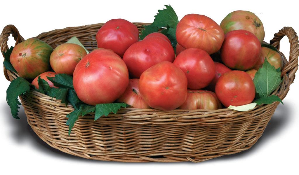 pomodoro di sorrento