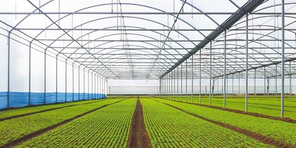 Progetto segis sistema esperto per la gestione dell for Irrigazione serra