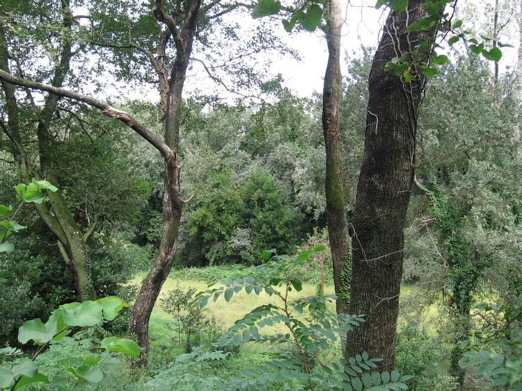 Le Fasce boscate di Persano