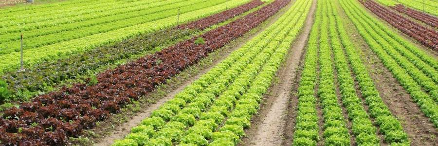 Bando PSR sostenibilità in agricoltura