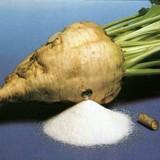 La barbabietola da zucchero