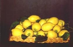 limone costa di amalfi
